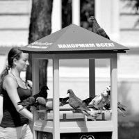 Фастфуд для голубей :: Игорь Попов