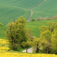 Roads and fields... :: Vladimir Nedayvoda