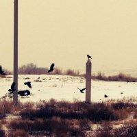 Вороны... :: Лейла Абдуллаева