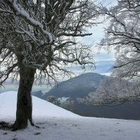 стоят деревья в серебре :: Elena Wymann