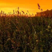 Сельский пейзаж :: Никита Заболотский