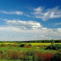 Поле,лес,облака... :: Юрий Анипов
