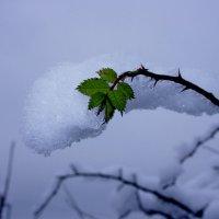 Ни зима, ни лето :: Вячеслав Карпов