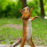 Летящей походкой иду я за водкой! :: Alex Bush