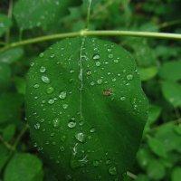 Настоящий дождь пошел вечером :: Андрей Лукьянов