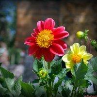 Городские цветы-2 :: Андрей Заломленков