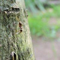 муравьишка 2 :: Николай Маров