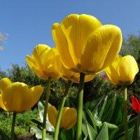 Как -то быстро прошла весна..... :: LORRA ***
