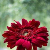 Flower :: Денис Сафронов