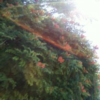 Радужный солнечный зонтик :: Dana