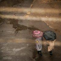 Дождик. :: Nerses Matinyan