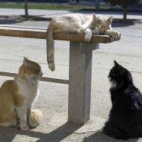 Коты :: Игорь Денисов
