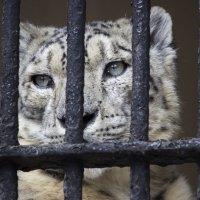 Хочу на свободу... :: Sergey Lebedev