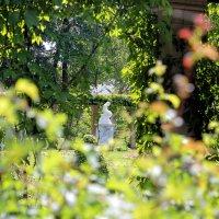 взгляд  через забор :: navalon M