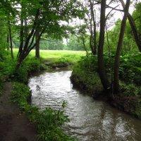 Вода, вода ... (После вчерашнего дождя) :: Андрей Лукьянов