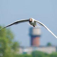 Чайка :: Дмитрий Яшин