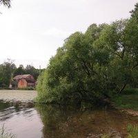 Баня :: Вера Щукина