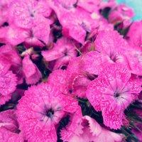 Цветочки :: Marina Letchenya