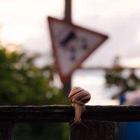 занос :: Денис Попов