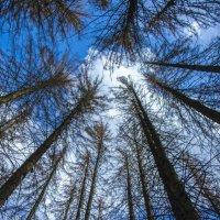 лес :: Яна Костюкова