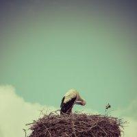Аист в гнезде :: Анна Никонорова