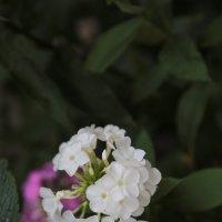 Цветочный хоровод-186. :: Руслан Грицунь