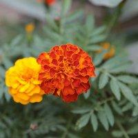 Цветочный хоровод-194. :: Руслан Грицунь