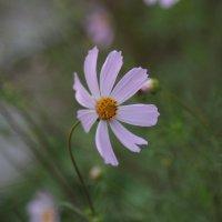 Цветочный хоровод-192. :: Руслан Грицунь