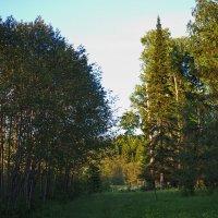 Вечер в лесу :: val-isaew2010 Валерий Исаев