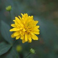 Цветочный хоровод-198. :: Руслан Грицунь