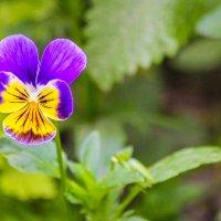 Цветок :: Алёнка Шапран