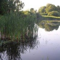 Озеро Белое :: Нименская Елена