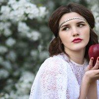 яблони в цвету :: Ольга Зимницкая