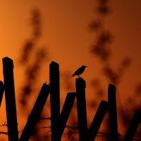 закат :: Denis Vasiliev