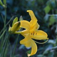 Желтый Цветок. :: Игорь