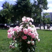В Украине лето! :: Миша Любчик