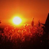 Янтарный закат :: оксана косатенко