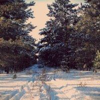зима в лесу :: Олег Белан