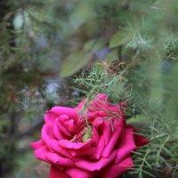 Цветочный хоровод-203. :: Руслан Грицунь