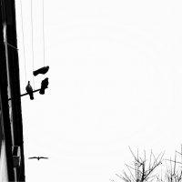 Tres :: Катерина Чебышева