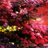 Краски :: Катерина Чебышева