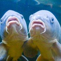 Рыбки :: Михаил Рулькевич