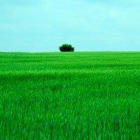 один в поле...... :: Роберт Хак.....