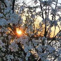 Закатная весна :: Tanika Неделенко