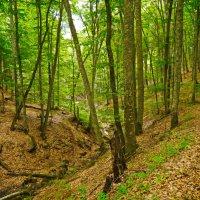 крымский лес :: Андрей Козлов