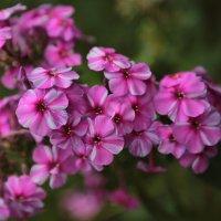 Цветочный хоровод-210. :: Руслан Грицунь