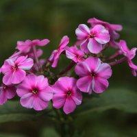 Цветочный хоровод-207. :: Руслан Грицунь