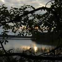 Дачное озеро. :: Игорь