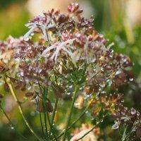 Цветы после дождя :: Zifa Dimitrieva