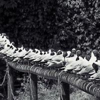 чайки :: Арсений Корицкий